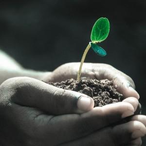 Plantas/árboles y abonos